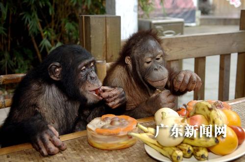 """野生动物也提前""""尝月""""吃""""月饼"""""""