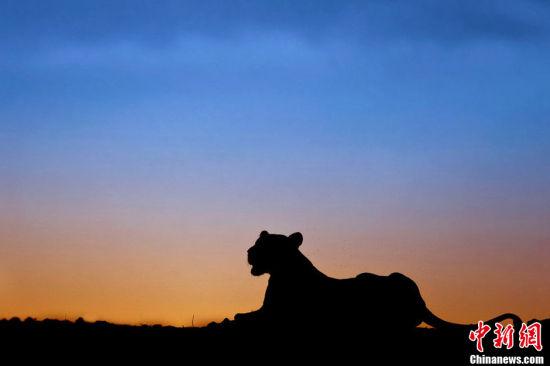 日落时分非洲草原动物唯美剪影(图)(3)