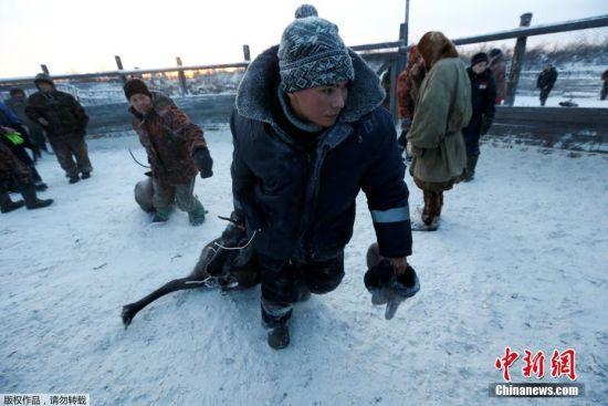 驯鹿的皮毛将会在盐里被保存,然后出口到国外,比如芬兰。