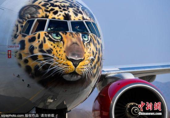 """3月6日消息,随着人类居住地拓展越来越广,让许多野生动物面临生态浩劫,许多极地地带的动物更是在气候及居住地的压力、人类掠杀濒临绝种。日前俄罗斯国家航空为提倡拯救""""阿穆尔豹""""推出777-300彩绘飞机,并命名为""""乌苏里克号""""或""""豹机"""",希望可以唤起人们对于豹的繁殖与重视。图片来源:Sipachina 版权作品 请勿转载"""