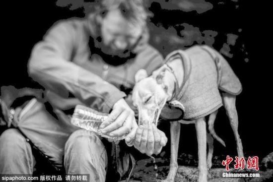 """6月21日消息,英国The Kennel Club狗狗沙龙每年都要举行一个名为""""年度狗狗拍照师""""的拍照竞赛,这个竞赛是全英最大也是前史最悠久的狗狗摄影比赛,不久前该沙龙发布了2017年度的获奖作品。图片来源:Sipachina 版权作品 请勿转载"""