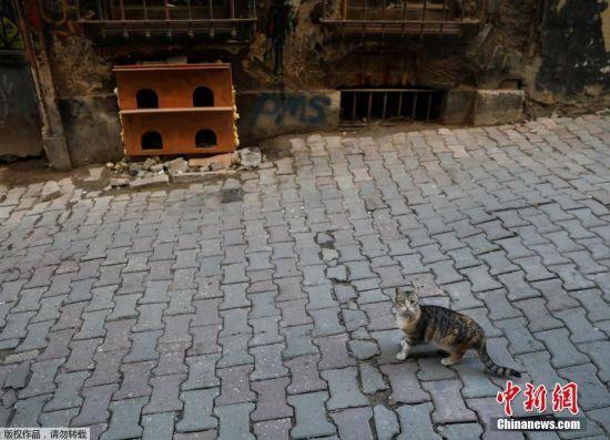 走在伊斯坦布尔街头,随处可见为流浪猫做的猫窝。市民们会把市内的流浪猫当宠物来喂养,猫咪们对人也十分亲近。