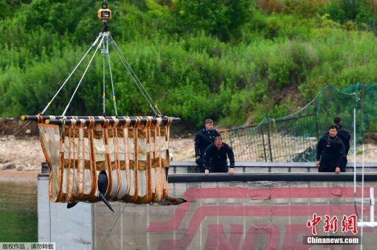 """2019年8月6日讯,据俄罗斯卫星网报道,俄罗斯联邦渔业署署长舍斯塔科夫表示,计划于2019年年底前放归滨海边疆区""""鲸鱼监狱""""中的所有鲸鱼。当地时间7月11日,员工们在斯雷德尼亚湾的""""鲸鱼监狱""""里用卡车将一头虎鲸装载到一个特殊的水箱中,准备将这三头虎鲸运送到奥霍茨克海岸的放生地。"""