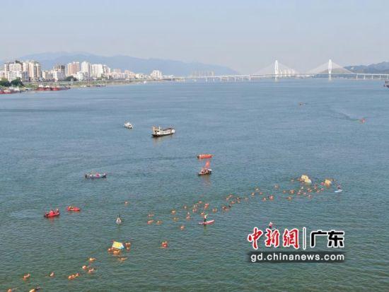 近600名游泳爱好者集体横渡西江 主办方供图