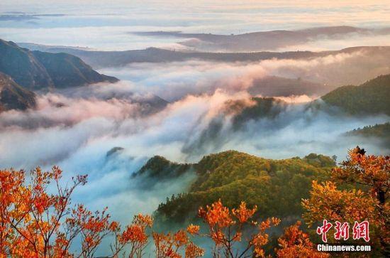 """金秋十月,""""道源圣地""""甘肃崆峒山秋意渐浓,层林尽染、黄绿交错,漫山间还有片片红叶点缀。登高望远,云遮雾盖,呈现云海奇观,如缥缈仙境。错落有致的""""色域空间"""",令人如痴如醉。崆峒山位于甘肃省平凉市,是古丝绸之路西出关中之要塞。景区面积84平方公里,主峰海拔2123米,森林覆盖率达95%以上。崆峒山自古就有""""中华道教第一山""""之美誉。万小莲 摄"""