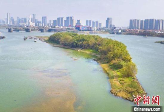近年来佛山河心岛生态修复卓有成效。图为美丽的海心沙。 广东省自然资源厅供图