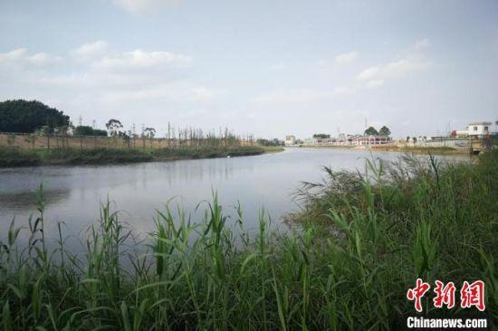 通过生态修复后昔日黑臭的江门沙坪河实现了水清岸绿。 广东省自然资源厅供图